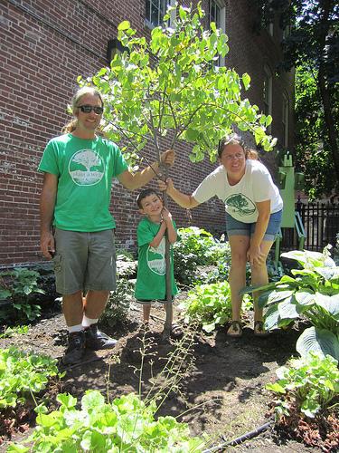 Joe, Sammy, and Sara plant a redbud in Lowell, MA