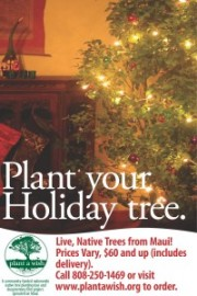 Planting Christmas' campaign offers Maui alternative to cut holiday trees, supports Plant a Wish project.