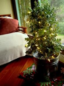 Live Native Christmas Trees on Maui