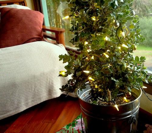 'Tis the Season for Planting Trees!