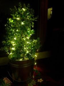 Tree Lit Night - For Web