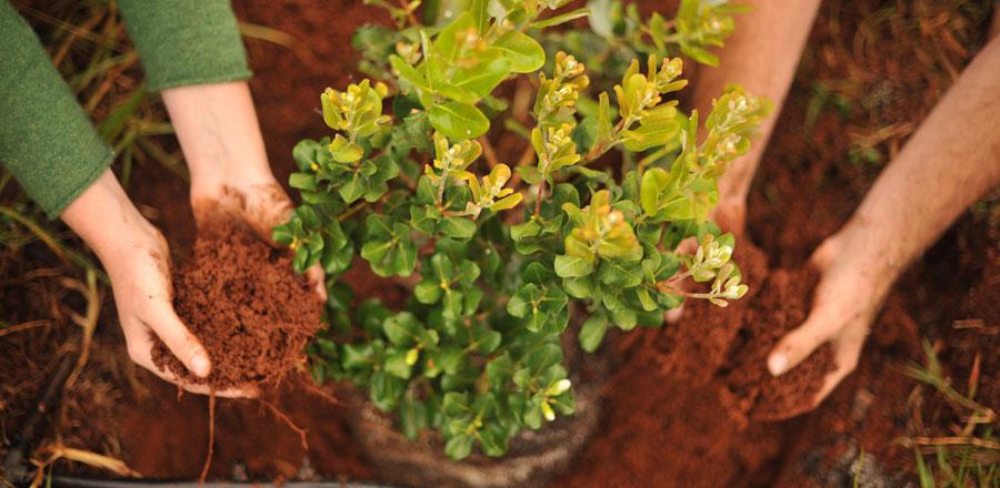 5 Ways to Plant a Tree on Maui with Plant a Wish